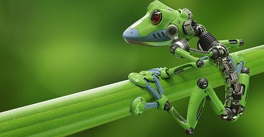 """Xenobots"": los primeros robots vivos creados a partir de células madre de rana"