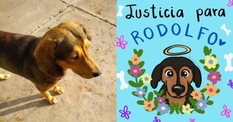 El verdadero trasfondo del caso de Rodolfo el perrito